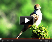 Bird-Breeding-Atlas-video