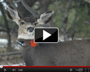 Energy-development-on-wildlife-video-thumb