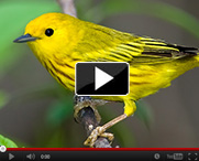 Songbirds as Indicators of Healthy Riparian Ecosystems