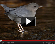 VIDEO: Naturalist Nights