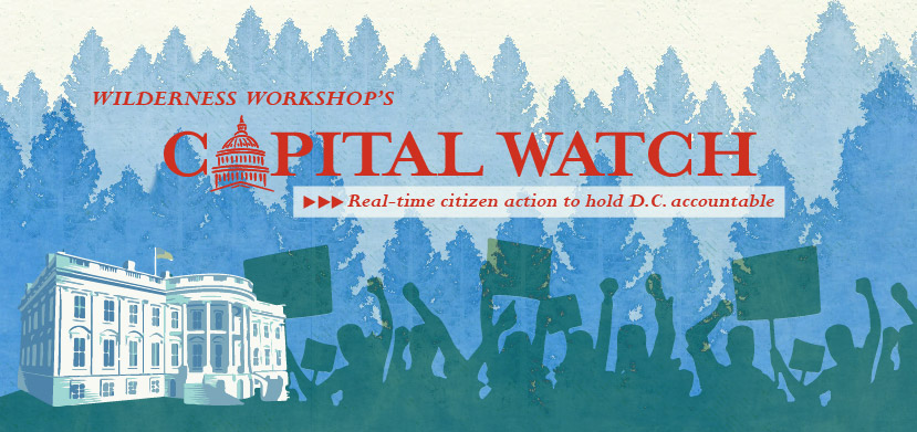 Capital-Watch-Email-Banner-01-01